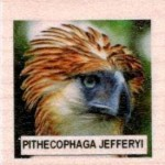 PITHECOPHAGA JEFFERYI