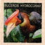 BUCEROS HYDROCORAX