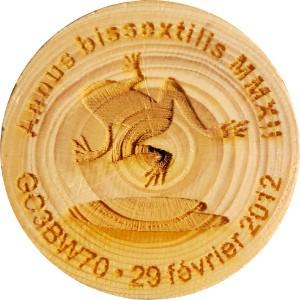 Annus bissextilis MMXII