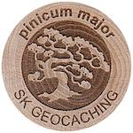 pinicum major